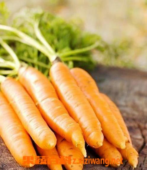 果蔬百科胡萝卜怎么吃营养 胡萝卜食用方法